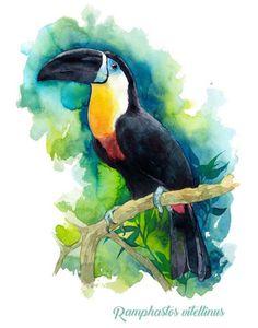 Toucan Watercolor Drawing