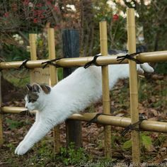Country Cat Hurrying Home, Knowing it's Almost Time to Eat.