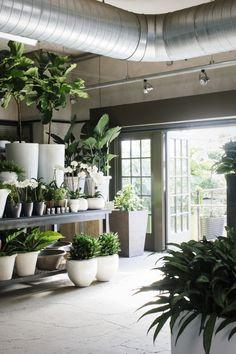 greens ans whites at Winston Flowers, Gardenista