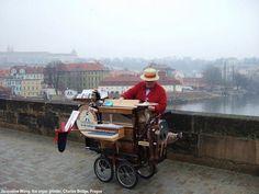 organ grinder, Prague