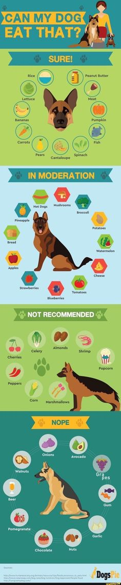 Dog Care Tips, Pet Care, I Love Dogs, Cute Dogs, Animals And Pets, Cute Animals, Dog Facts, Dog Life, Dog Mom