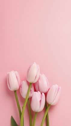 Easter Inspiration pink tulips at the bottom, on a pink background, spring wallpaper, phone wallpaper Wallpaper Flower, Frühling Wallpaper, Nature Iphone Wallpaper, Trendy Wallpaper, Flower Backgrounds, Wallpaper Ideas, Spring Backgrounds, Pink Wallpaper Backgrounds, Phone Wallpapers