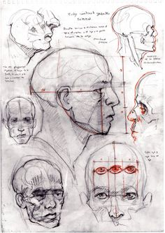 Head Structure by David Gau Anatomy Sketches, Anatomy Art, Anatomy Drawing, Drawing Sketches, Art Drawings, Human Anatomy, Sketching, Drawing Heads, Body Drawing