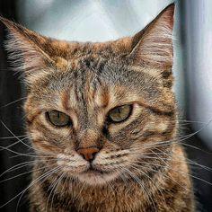 Il gatto, compagno pigro e sfuggente, elettrico e carezzevole è una fonte inesauribile di enigmi, delizie e tormenti. (Desmond Morris) 🐱  #Messina #Sicilia #catofsicily
