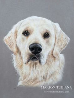 Pencil Sketches Of Animals, Animal Drawings, Dog Drawings, Dog Photos, Dog Pictures, Animals And Pets, Cute Animals, Dog Artist, Realistic Drawings