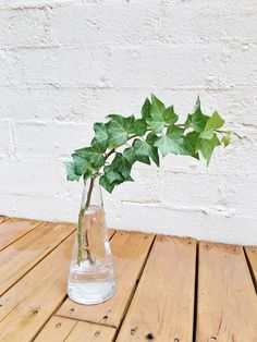 A quick guide on two ways to grow Ivy from a cutting!