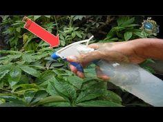 Hecha Vinagre en Unas de Tus Plantas del Jardín, Lo que Sucederá en 1 Minuto es Algo Increíble - YouTube