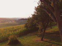 Bei Rauchwart - eine typisch burgenländisch-steirische Landschaft, so richtig idyllisch