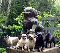 Pug Heritage