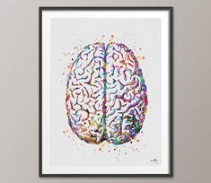 Brain Anatomy Watercolor Print Medical Art Science Art Anatomy