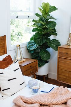 How to Design The Perfect Bedroom & a Sneak Peek of Our Renovation How to design the perfect bedroom! Beautiful bedroom decor with natural wood furniture and huge plant. Natural Wood Furniture, Natural Wood Decor, Modern Furniture, Luxury Duvet Covers, Luxury Bedding, Bedroom Green, Bedroom With Plants, White And Brown Bedroom, Home Decor Bedroom