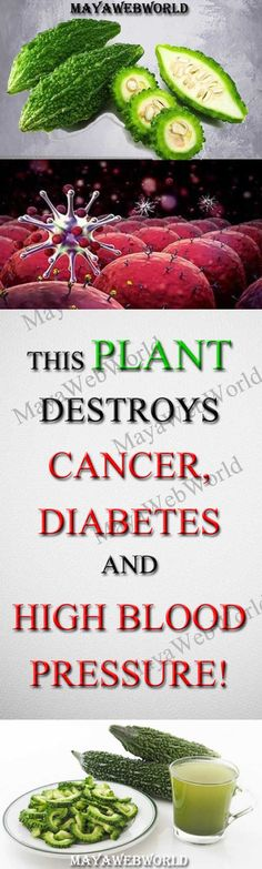 This plant destroys Cancer, Diabetes And High Blood Pressure! – MayaWebWorld
