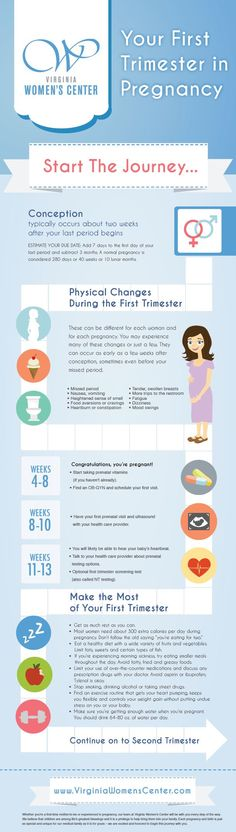 Your First Trimester In Pregnancy