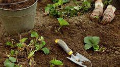 obrázek z archivu ireceptar.cz Garden Trowel, Garden Hose, Garden Tools, Outdoor, Compost, Outdoors, Yard Tools, Outdoor Games, The Great Outdoors