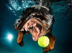 Hundar som fångar en boll under vattnet - det sjukaste och roligaste jag sett på länge!