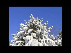 If Every Day Was Like Christmas Time- Elvis PresleY - the words have so much meaning !