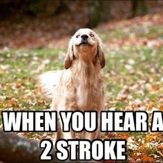 Two stoke dog Dirtbike Memes, Motocross Funny, Motocross Quotes, Dirt Bike Quotes, Motorcycle Memes, Girl Motorcycle, Motocross Tracks, Motorcross Bike, Car Jokes