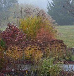 Beautiful grasses in John's New Jersey Garden