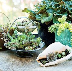 succulents in containers. Find many items such as these at the thrift shop and plant succulents in them and put in silent auction.
