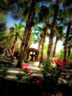 Filming Boojum Tree Hidden Gardens in Phoenix, AZ Hidden Garden, Maid Of Honor, Phoenix, Wedding Stuff, Gardens, Film, Places, Maid Of Honour, Movie