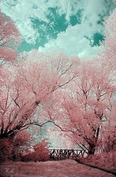50 Most Beautiful Trees Photography