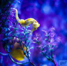 Vijf tips om een aquarium te fotograferen