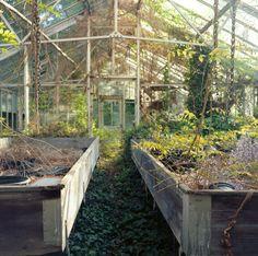 Abandoned Reform School for Girls Matt Hurst // personal.matthurstphoto.com/ #boarding #school #reformschool #vines #greenhouse #flowers #pe...
