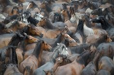 Caballos Salvajes by Guillermina Sogo on 500px