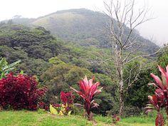 Cabinas Belcruz in Monteverde #CostaRica   monteverdetours.com