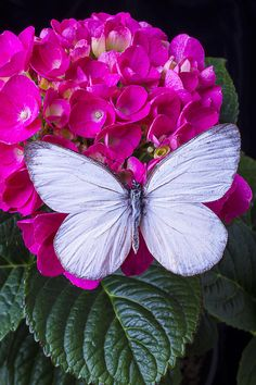 White Photograph - White Wings by Garry Gay