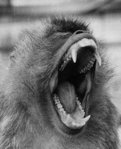 Thoughtcrime: Attack of the Howler Monkeys
