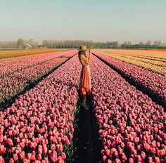 5 Things To Do In Amsterdam #flowerfields