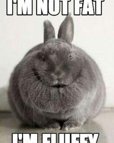 I'm not fat. I'm fluffy.  #bunny #cuteanimals #pets