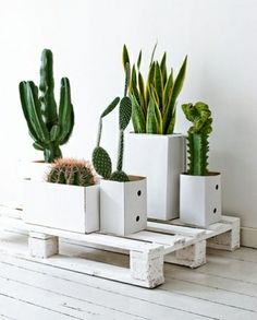 cactus and green plants in square planters