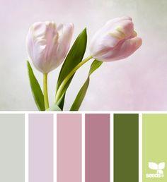 Tulip Tones 2
