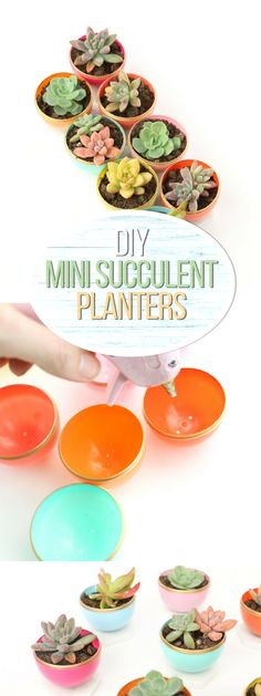 Check out how to make DIY mini succulent pots @istandarddesign