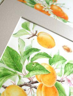 Watercolor fruits & berries on Behance Watercolor Fruit, Botanical Illustration, Berries, Watercolors, Make It Yourself, Drawings, Behance, Design, Art