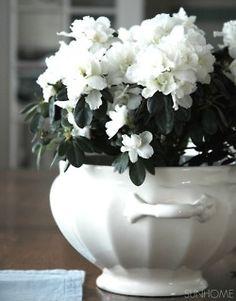 white flowers in white