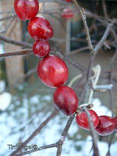cranberry krans