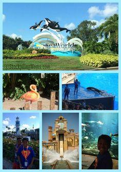 Tips For Enjoying SeaWorld, Orlando Florida