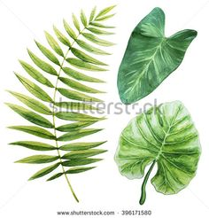 Tropical leaves. Watercolor illustration.