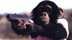 Self-Policing Chimps