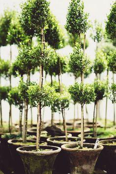 Topiary FleaingFrance Brocante Society