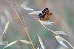 Adiós al verano... by mercedesalvador. Please Like http://fb.me/go4photos and Follow @go4fotos Thank You. :-)