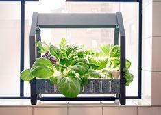 ikea introduce a hydroponic indoor gardening kit garden pinterest indoor gardening hydroponics and gardens - Indoor Vegetable Garden Kit