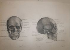 graphite for anatomy and physiology class, by Patti Umlauf