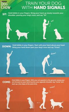Learn how to train your dog with hand signals. Hand signal training can be fun to teach and easy for most dogs to understand, so get started today! How To Train A Pitbull Puppy Basic Commands Clicker Training Puppy, Pitbull Training, Puppy Training Tips, Training Your Dog, Potty Training, Training Pads, Agility Training, Training Collar, Dog Agility