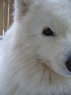 I want to seek my face into this fur. Gorgeous dog.