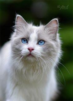Love Blue Eyes!!