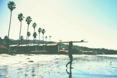 Surfy.
